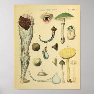 Copie médicale vintage d'art d'anatomie de nerfs poster
