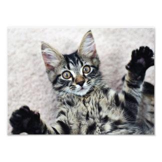 Copie mignonne de photo de chaton