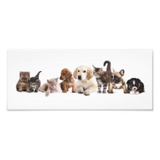Copie mignonne de photo de panorama d'animal