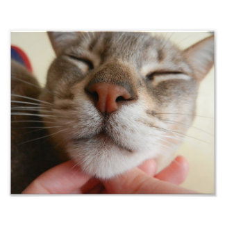 Copie mignonne de photo de visage de chat