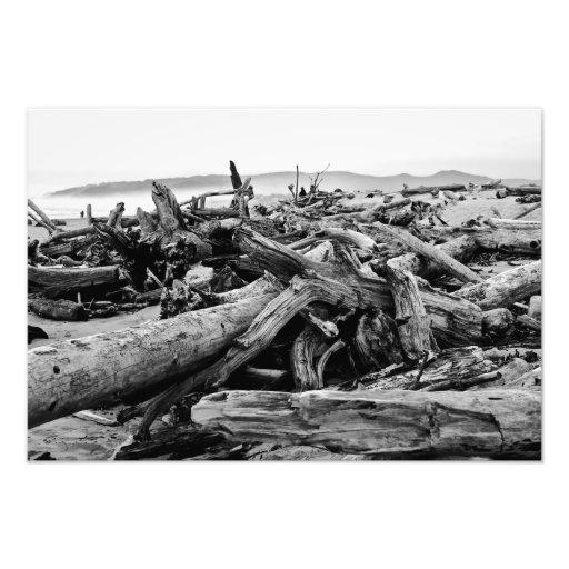 Copie noire et blanche de bois de flottage de côte impressions photo