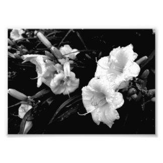 Copie noire et blanche de Lillies Photo D'art