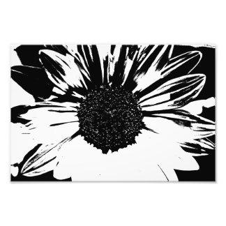 Copie noire et blanche de tournesol  tirage photo
