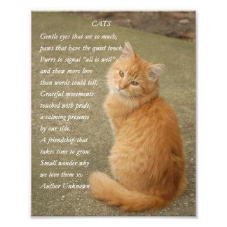 Copie orange mignonne de photo de poème de chat de