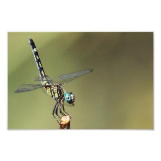 Copie personnalisable, libellule avec des yeux de impression photo