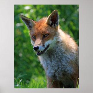 Copie rouge de portrait de photo de Fox belle, aff Poster