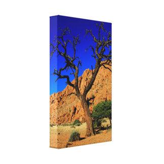 Copie rouge de toile de la Namibie d'arbre de sol