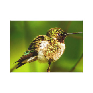 Copie Rubis-Throated de toile de colibri