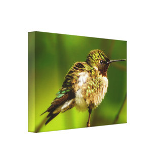 Copie Rubis-Throated de toile de colibri