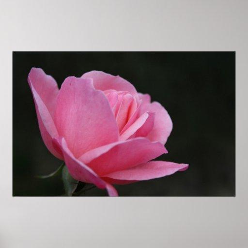 Copie sensible de rose poster