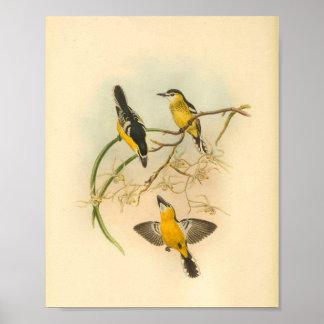 Copie vintage affrontée blanche d'oiseau jaune de poster