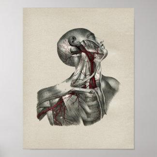 Copie vintage d'anatomie humaine de cou posters
