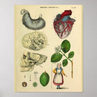 Copie vintage d'art d'anatomie d'estomac de crâne poster