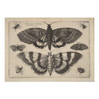 Copie vintage d'art de lépidoptères de mite (64) poster
