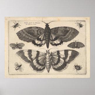 Copie vintage d'art de lépidoptères de mite (64) posters