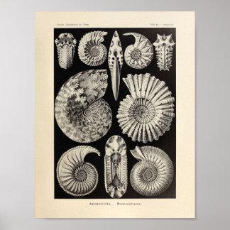 Copie vintage d'art d'Ernst Haeckel de couleur Posters