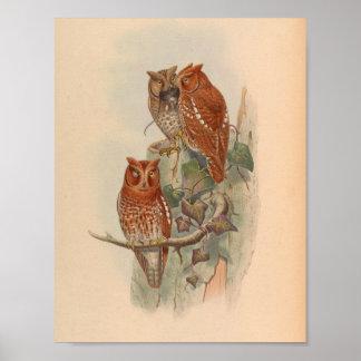 Copie vintage d'art d'oiseau de Brown de hibou de Poster