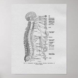 Copie vintage de nerfs autonomes de chiropractie affiches