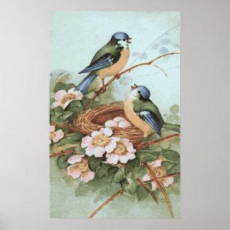 Copie vintage d'oiseaux poster