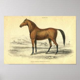 Copie vintage Filley de cheval Poster