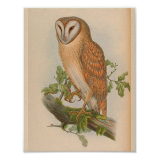 Copie vintage indienne d'art d'oiseau de Brown de Poster