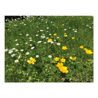Copies de photo de marguerites jaunes et blanches