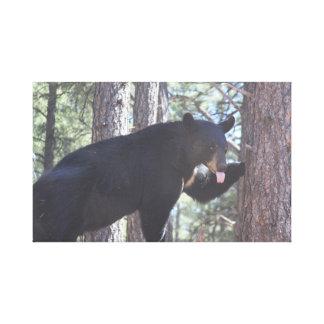 Copies de toile d'ours noir