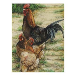 """Coq """"de gamme libre"""" et carte postale de 2 poules"""