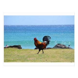Coq de Kauai Carte Postale