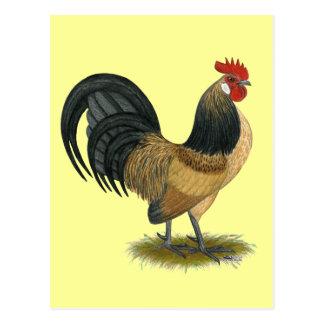 Coq nain néerlandais :  Coq bleu de cailles Cartes Postales