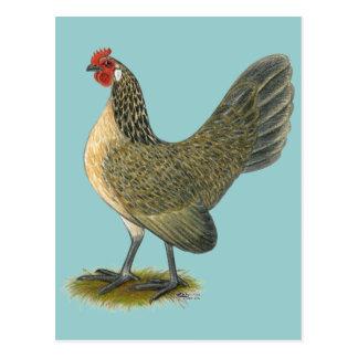 Coq nain néerlandais :  Poule bleue de cailles Cartes Postales