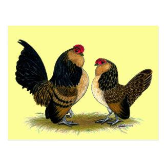 Coqs nains belges de d'Anvers :  Cailles Cartes Postales