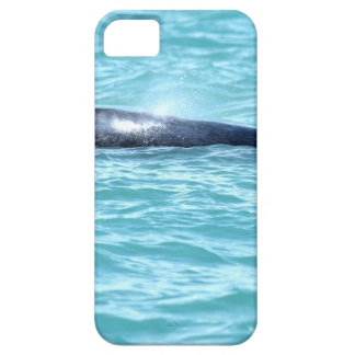 COQUE BARELY THERE iPhone 5 BALEINE DE BOSSE QUEENSLAND AUSTRALIE