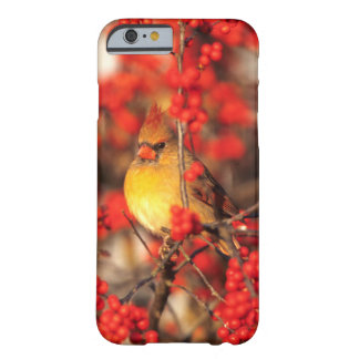Coque Barely There iPhone 6 Baies femelles et rouges cardinales, IL