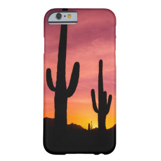 Coque Barely There iPhone 6 Cactus de Saguaro au lever de soleil, Arizona