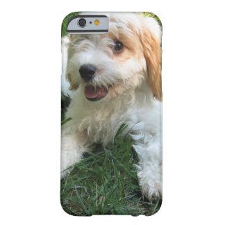 Coque Barely There iPhone 6 Cas customisé de téléphone de photo de Cavachon,