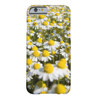Coque Barely There iPhone 6 Champ de camomille, Hongrie