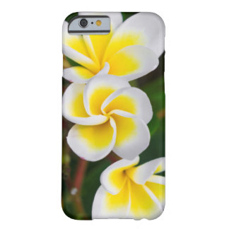 Coque Barely There iPhone 6 Le Plumeria fleurit le plan rapproché, Hawaï