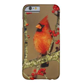 Coque Barely There iPhone 6 Mâle cardinal du nord été perché, IL