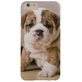Coque Barely There iPhone 6 Plus Chiots anglais de bouledogue