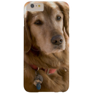 Coque Barely There iPhone 6 Plus Fermez-vous du chien d'or de labrador retriever