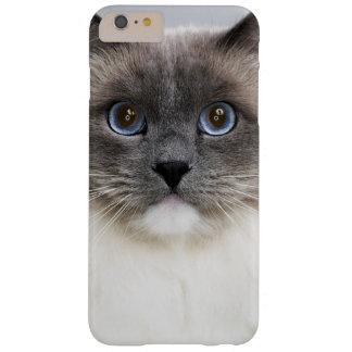 Coque Barely There iPhone 6 Plus Portrait de chat de Ragdoll