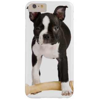 Coque Barely There iPhone 6 Plus Terrier de Boston gardant l'os twisty