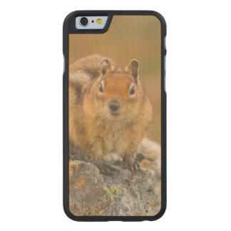 COQUE CARVED® SLIM iPhone 6 EN ÉRABLE