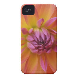 Coque Case-Mate iPhone 4 Beau dahlia d'Ombre