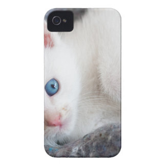 Coque Case-Mate iPhone 4 chaton