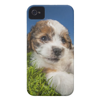 Coque Case-Mate iPhone 4 Chiot mignon (Shitzu)