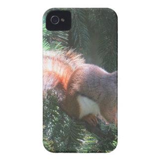 Coque Case-Mate iPhone 4 Écureuil rouge