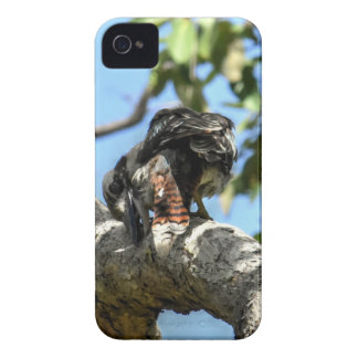 COQUE Case-Mate iPhone 4 KOOKABURRA QUEENSLAND RURAL AUSTRALIE