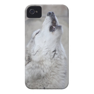 Coque Case-Mate iPhone 4 Loup gris d'hurlement